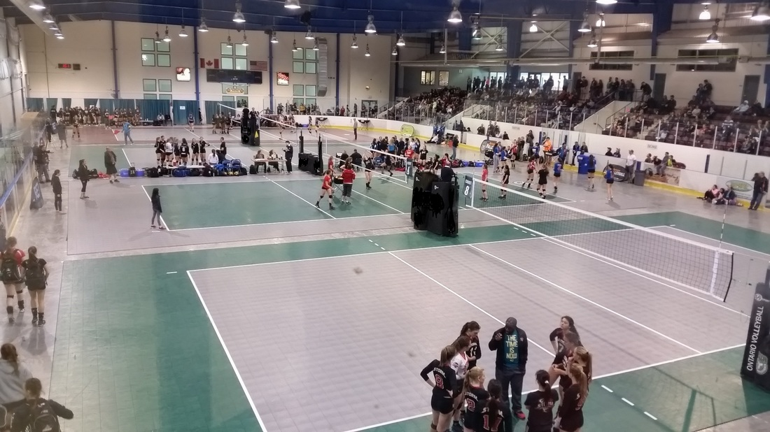 Scorpions Volleyball Sports Courts